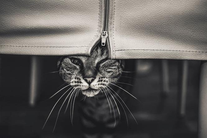 Fotos gatos Felicity Berkleef