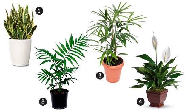 Plantas para o jardim de inverno