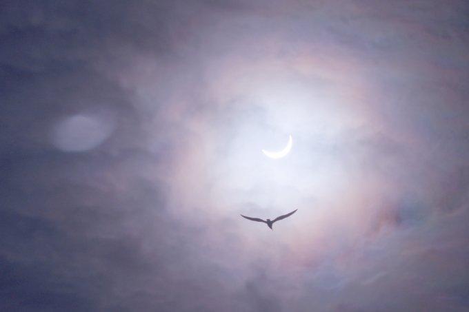 Eclipse Solar – Signos