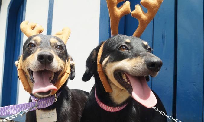 Cachorros com tiara de rena