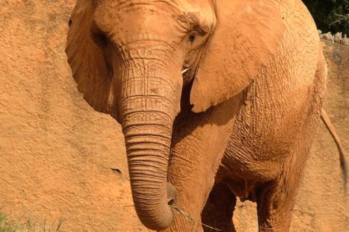 elefanta teresita
