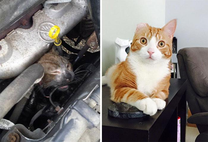Gato resgatado de motor de carro