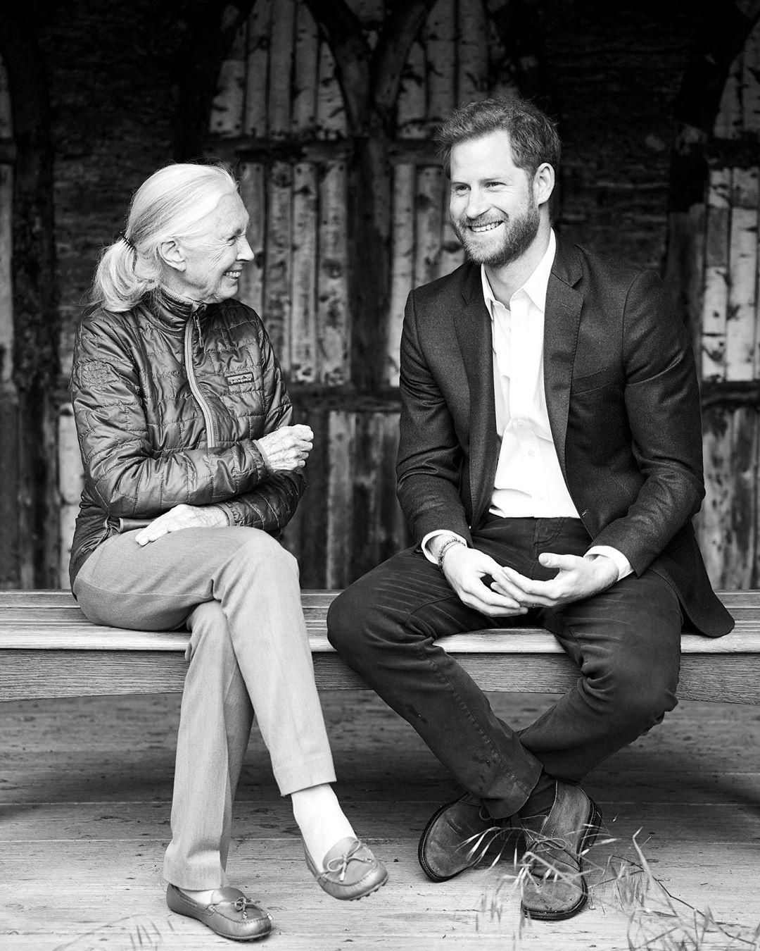 Harry em entrevista com a cientista Jane Goodall
