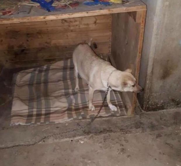 Maggie foi encontrada amarrada a uma caixa e muito ferida