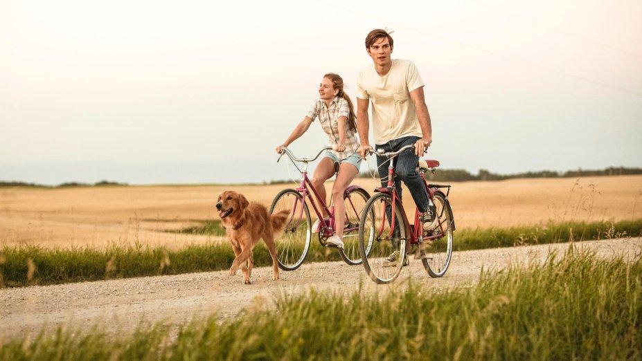 """<strong>Quatro Vidas de Um Cachorro (estreia em 26/08):</strong><span style=""""font-weight:400;"""">Um cão descobre o significado de suas reencarnações ao lado de seus donos humanos, vivenciando tanto a lealdade e o amor quanto a dor e a decepção.</span>"""