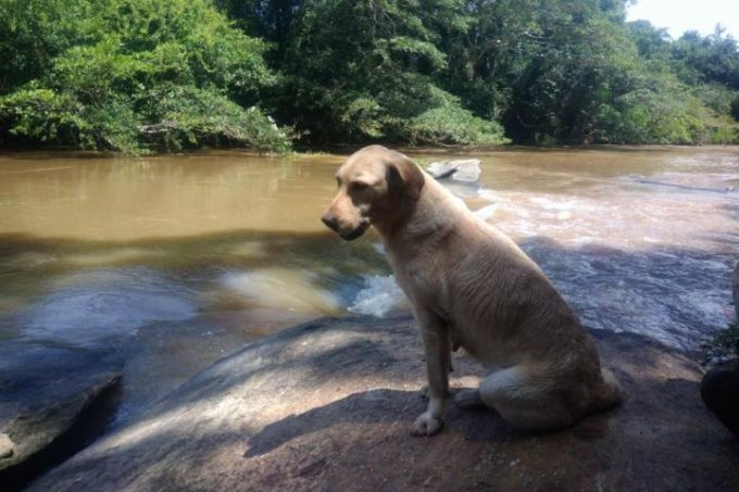 Vênus, cadela que atuava nas buscas de Brumadinho