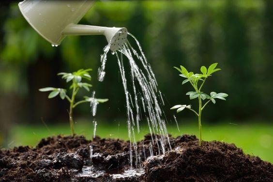 Como cuidar de plantas e flores para harmonizar a decoração da casa