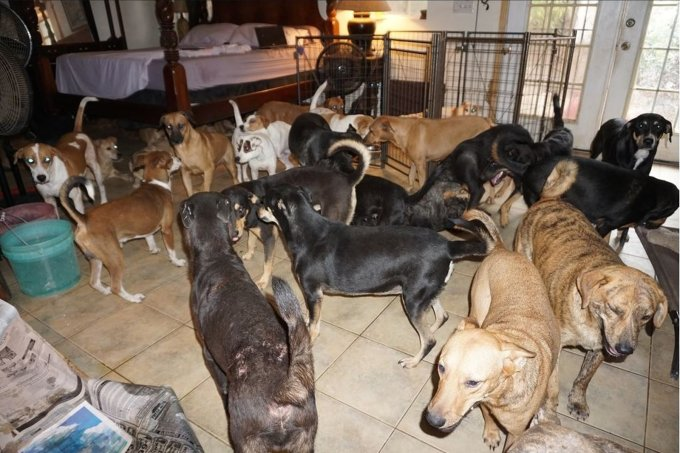 Cachorros Nassau