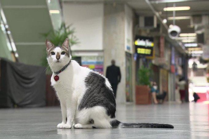 Gato Rubinho