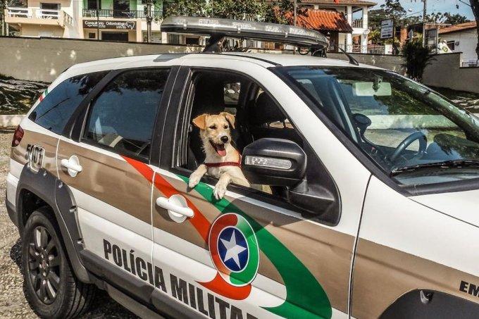 Cachorro resgatado