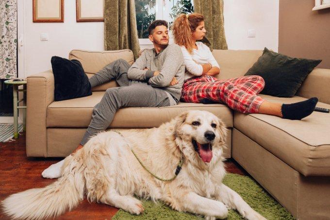 Como fica o cachorro no divórcio?