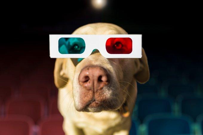 Cachorro usando óculos 3D