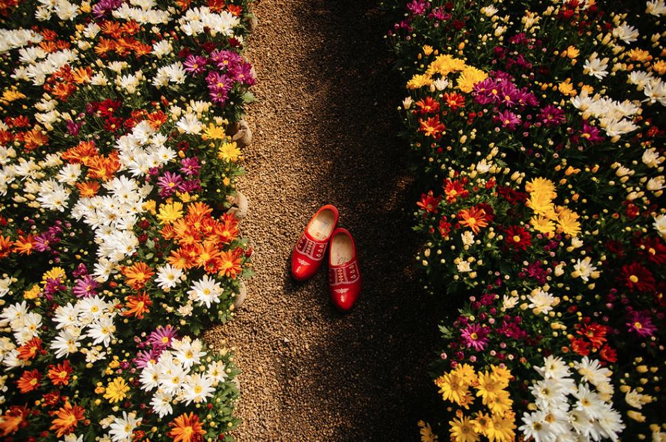 Flores de Holambra (SP)