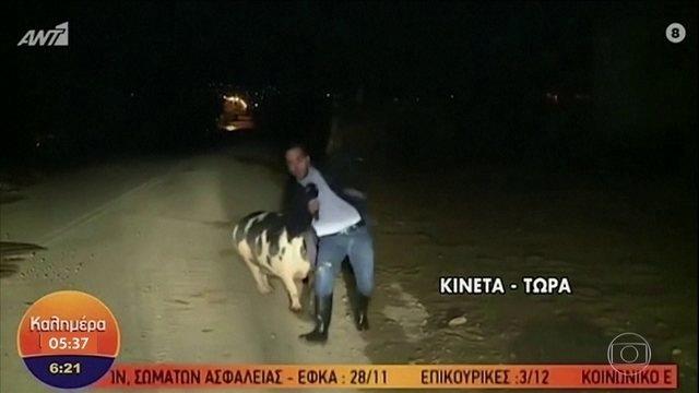 jornalista-perseguido-porco