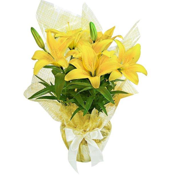 """<span>Arranjo de lírio amarelo plantado. <a href=""""https://www.giulianaflores.com.br/lirio-amarelo-plantado/p13645/?src=promo70"""">Giuliana Flores</a>, R$ 87,21</span>"""