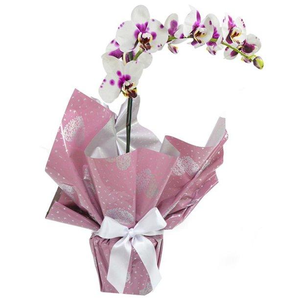"<span>Orquídea phalaenopsis mesclada plantada, nas medidas 15 x 35 cm. <a href=""https://www.giulianaflores.com.br/orquidea-phalaenopsis-mesclada-presente/p27318/"" target=""_blank"" rel=""noopener"">Giuliana Flores</a>, R$ 178, 80</span>"