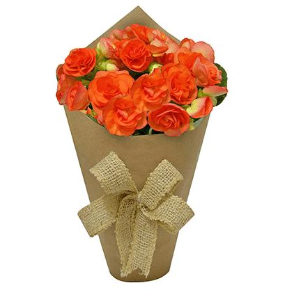 """<span>Begônias cor de laranja plantadas com embalagem de kraft, nas medidas 10 x 22 cm. <a href=""""https://www.novaflor.com.br/jardim-da-begonia-laranja/p28850/?src=DEPT"""" target=""""_blank"""" rel=""""noopener"""">Nova Flor</a>, R$ 96,60</span>"""