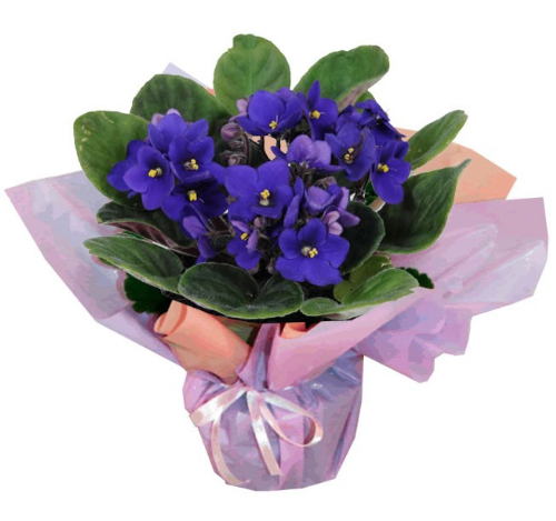"""Vasinho de violetas, nas medidas 25 x 15 cm. <a href=""""https://www.uniflores.com.br/vaso-de-violetas"""" target=""""_blank"""" rel=""""noopener"""">UniFlores</a>, R$ 47"""
