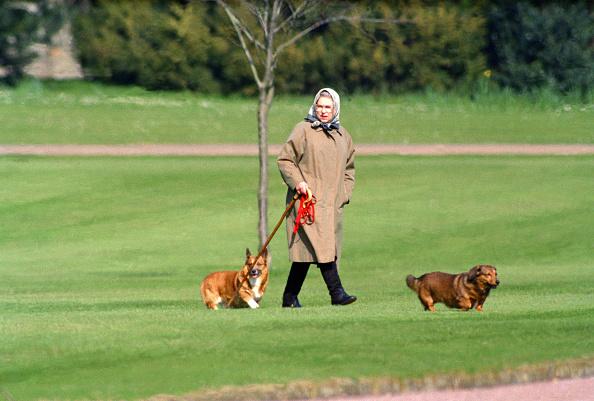 Rainha Elizabeth II passeando com seus cachorros