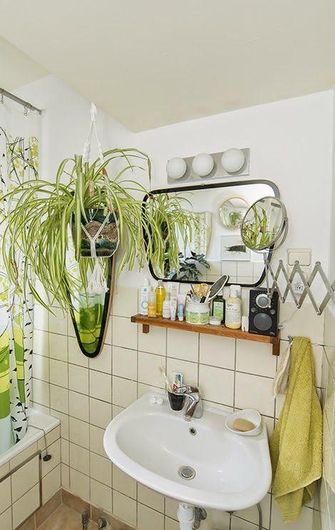 Plantas para ter no banheiro - clorofito
