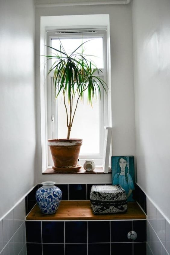 Plantas para ter no banheiro - dracena