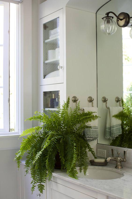 Plantas para ter no banheiro - samambaia americana