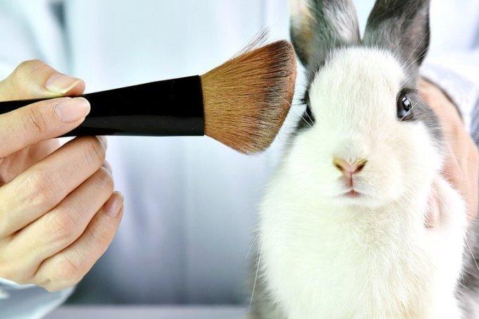 Quais as diferenças entre cosméticos veganos, orgânicos, naturais e cruelty free?