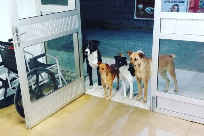 Cães no hospital