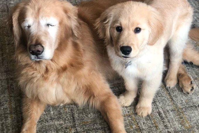 Cachorrinhos Charlie e Maverick