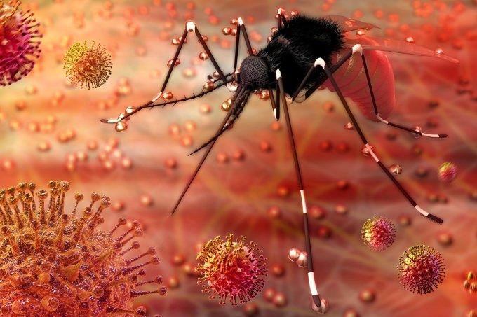 Aedes aegypti – dengue, febre amarela, zika vírus e chikungunya