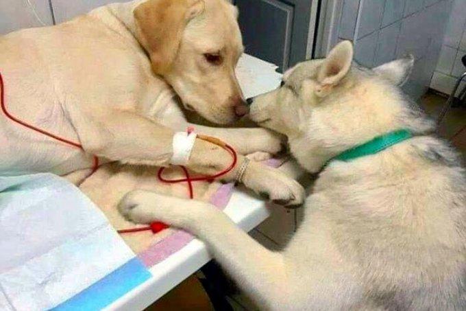 Cachorro conforta paciente em clínica
