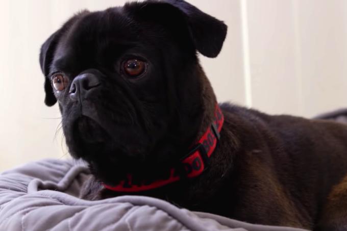 Cachorro no documentário A Casa é dos Cachorros