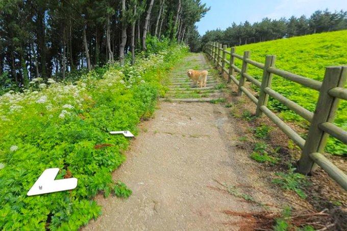 Cachorro segue fotógrafo de Street View