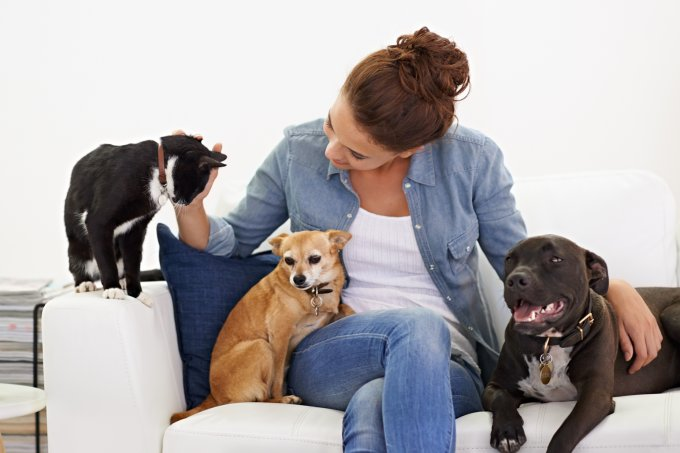 Casa com pets cheirosa e limpinha dicas de especialistas