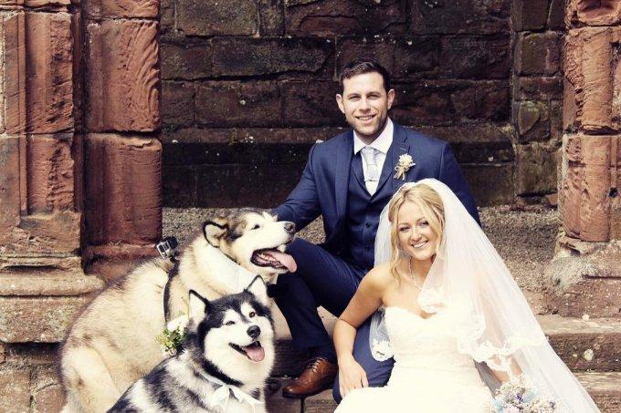 casamento cachorros