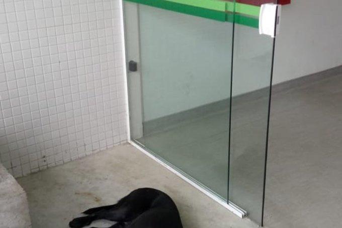 Cão em hospital de Santos