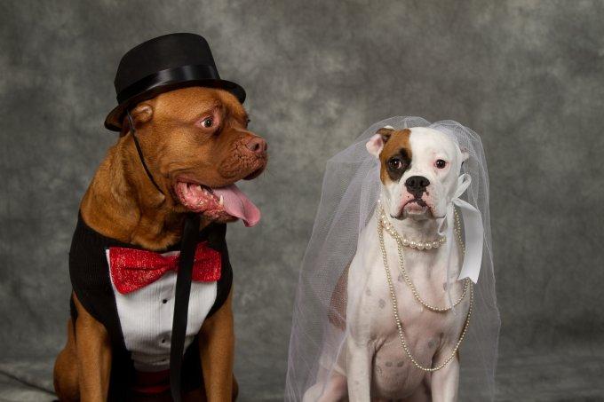 Como colocar seu animal de estimação na cerimônia de casamento?