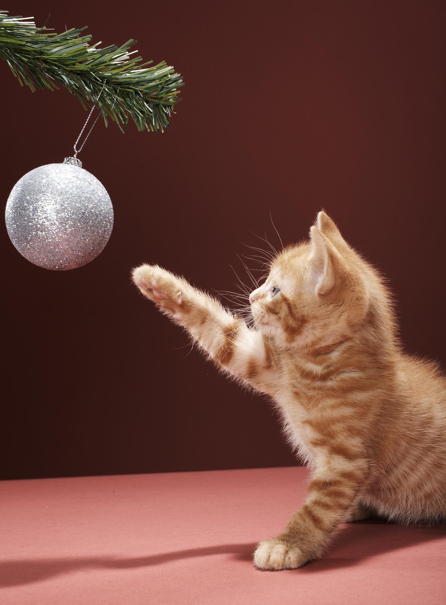 Gatinho brincando com bola de Natal
