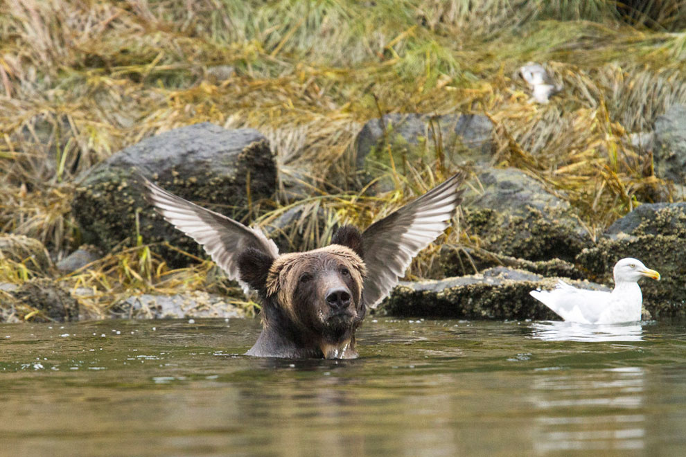 Adam Parsons/Barcroft Images/Comedy Wildlife Photography Awards 2016