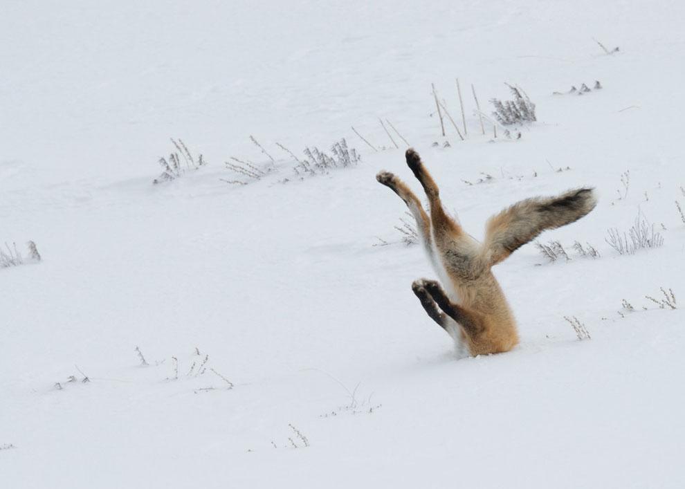 Angela Bohlke/Barcroft Images/Comedy Wildlife Photography Award