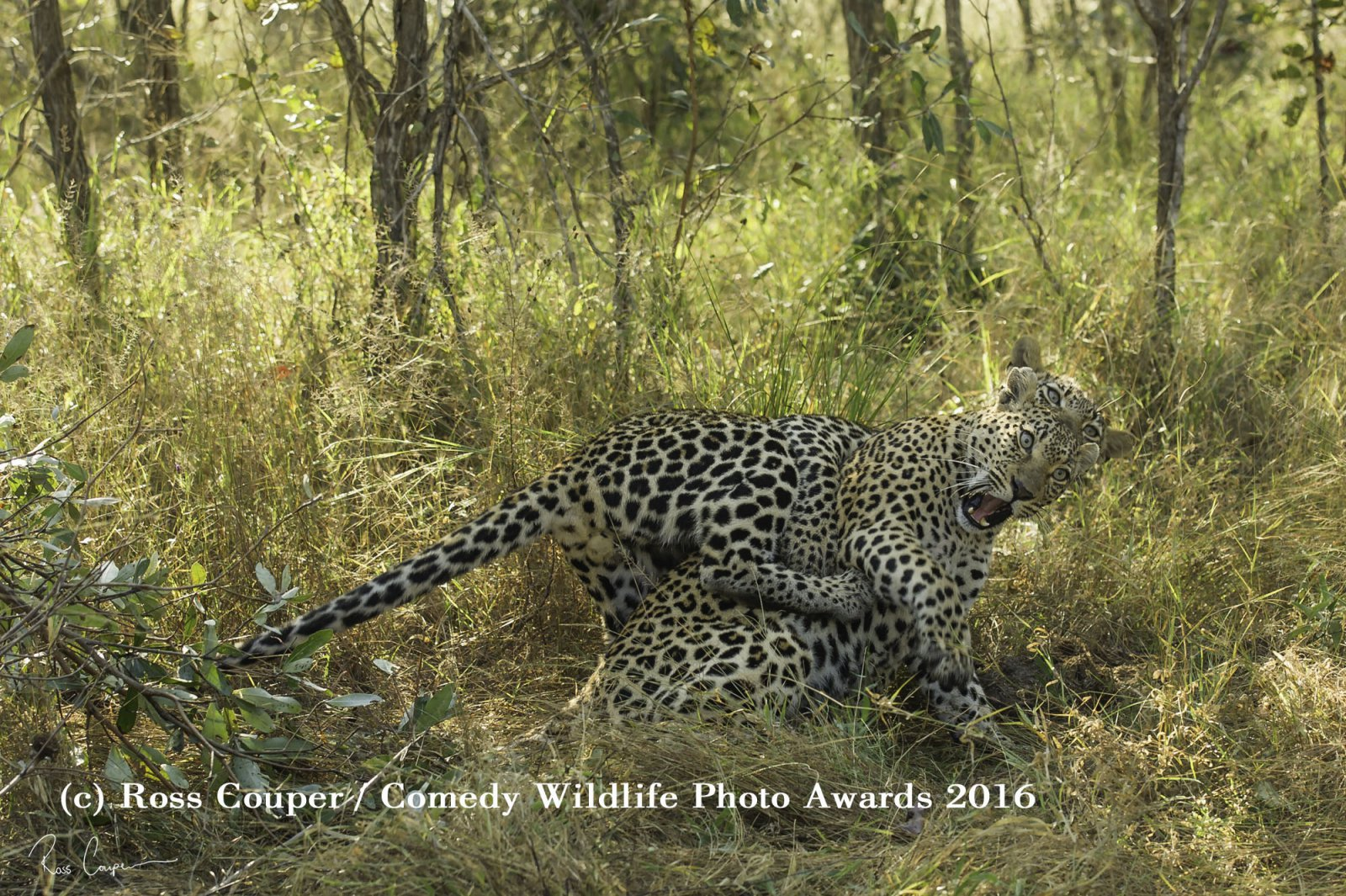 Reprodução/Comedy Wildlife Photo