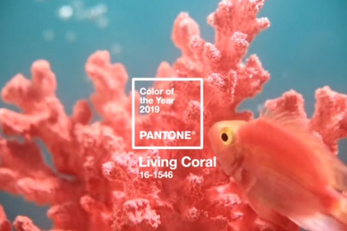 cor do ano pantone living coral