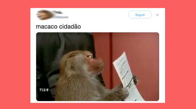 Destaque do macaco cidadão