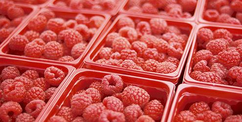 framboesa-fruta-alimento-dieta-5125-1