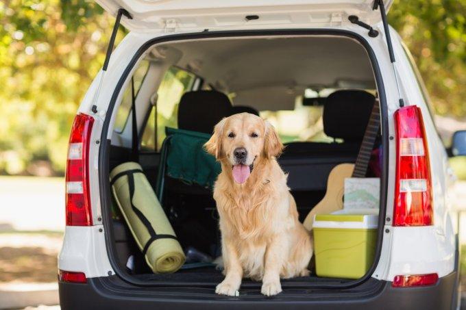 Viajar com os pets