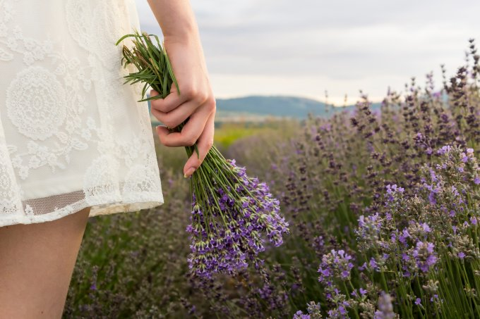 On lavender field girl in white dress holding bouquet