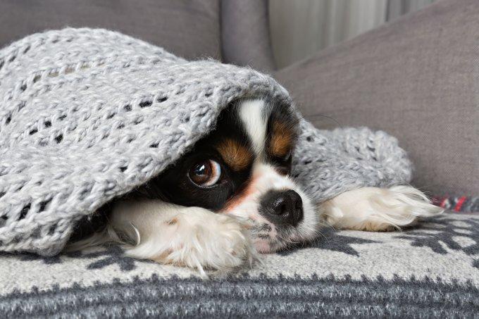 Cão se protegendo do frio.