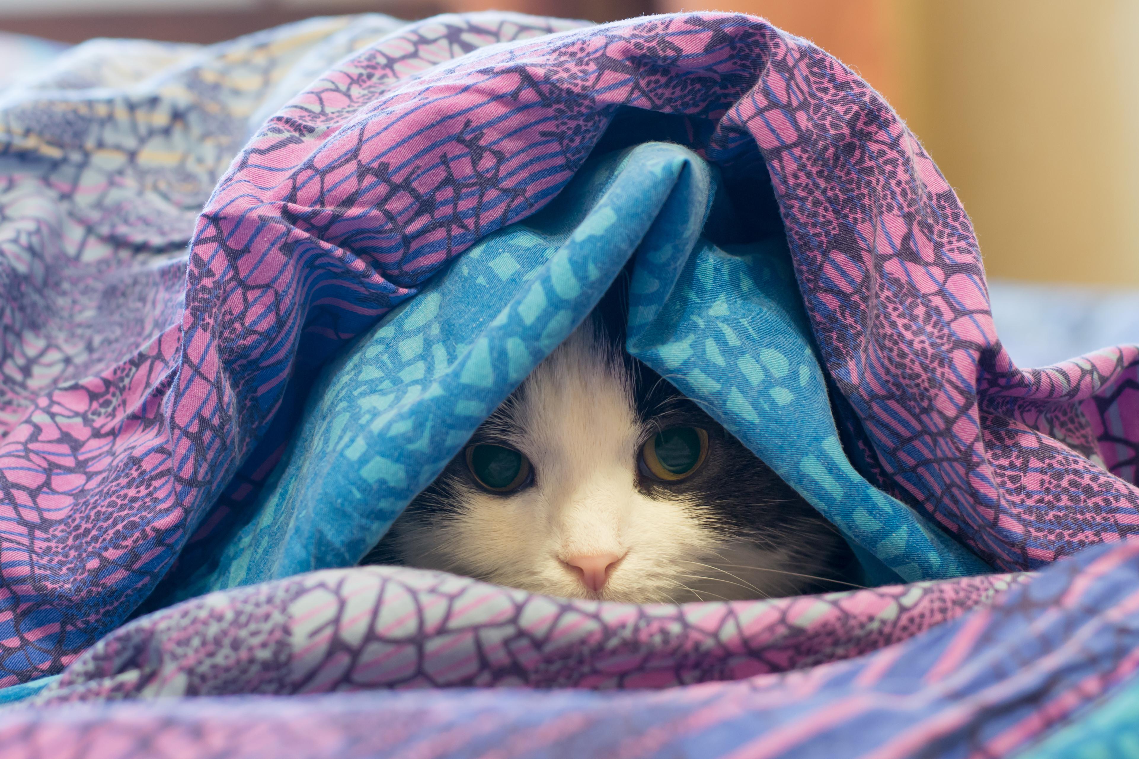 cobertores frio gato