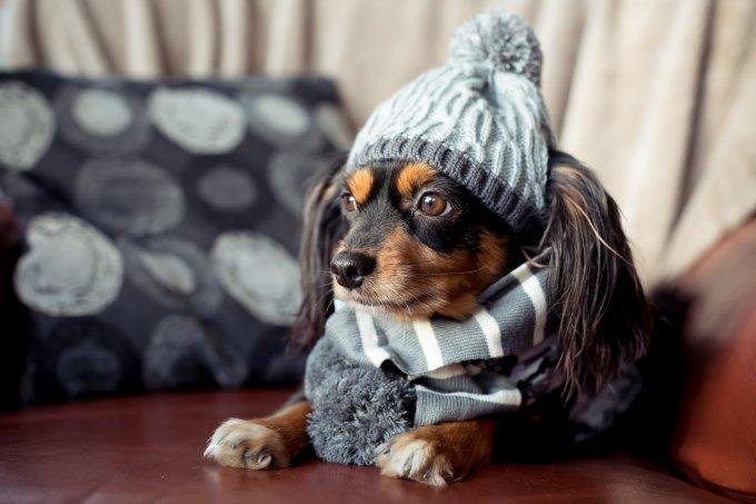 Cachorro-agasalhado