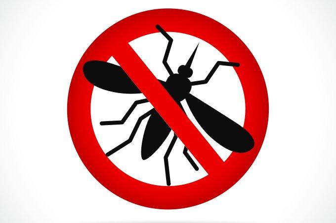Mosquito da dengue – Aedes aegypti